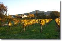 Little Creek Vineyard