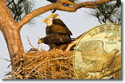 Bald eagles nesting with coin