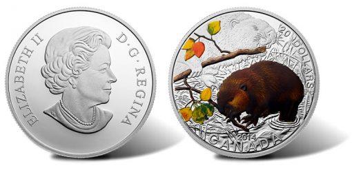 2014 Baby Beaver Coin