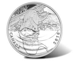 Canadian 2016 Otter Wildlife Reflections Silver Proof Coin