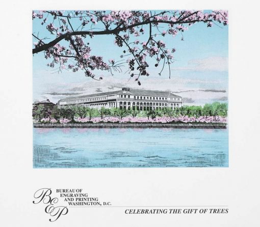 Cherry Blossom Engraved Print