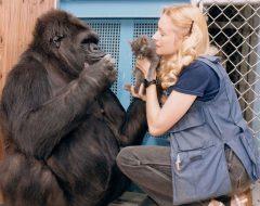 koko_gorilla.jpg